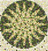 STRI_mosaic