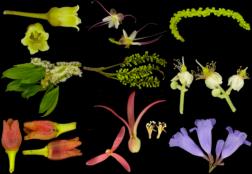 BCI plants