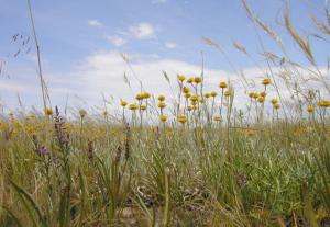 WBP grassland