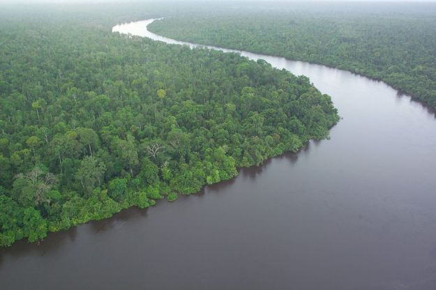 Peat_swamp_forest_Kalimantan