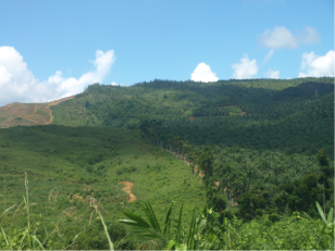 Cleared forest awaiting oil palm planting (left) and established oil palm plantations (right)