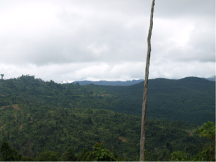 Logged forest (left) and oil palm plantation (right) near the SAFE camp