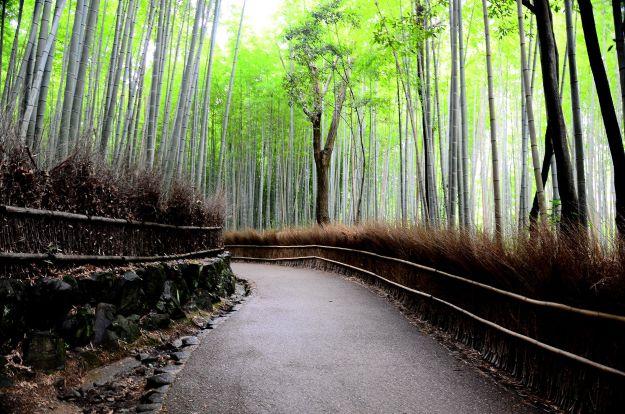 Bamboo_forest_Japan_Dariusz_Jemielniak
