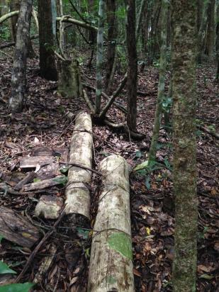 Bamboo in Namtok Sam Lan National Park, Saraburi province, approximately 120 km northeast of Bangkok