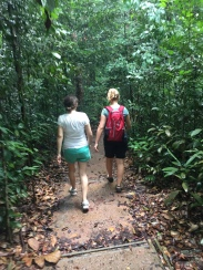Hiking in natural forest near Bukit Timah in Singapore